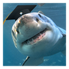 Shark with graduation cap